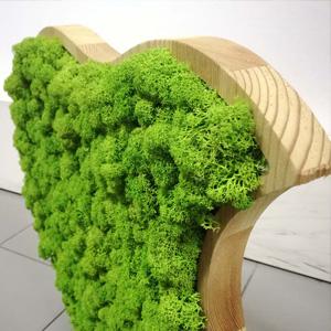 legno e lichene